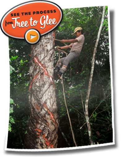See the Process from Tree to Glee Gum