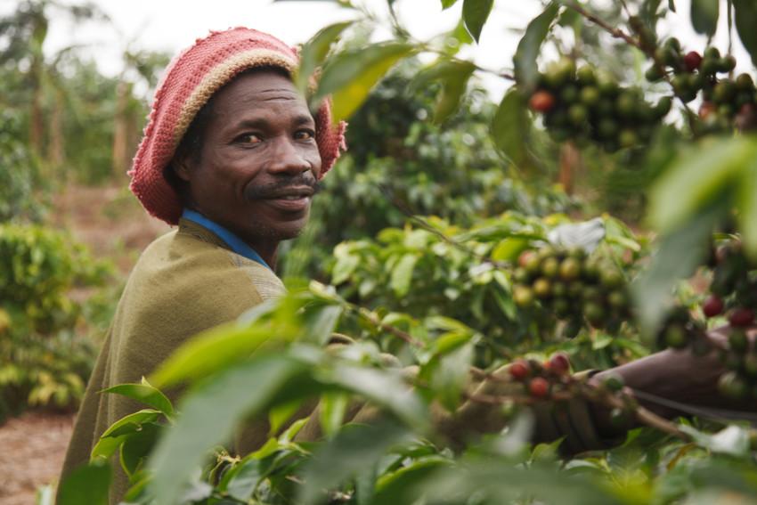 borunsya-agenina-ankole-coop-uganda-coffee