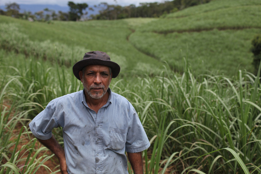 enriquemoramontero-coopeagri-costarica-sugar